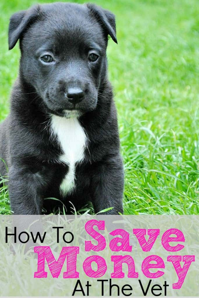 How To Save Money At The Vet