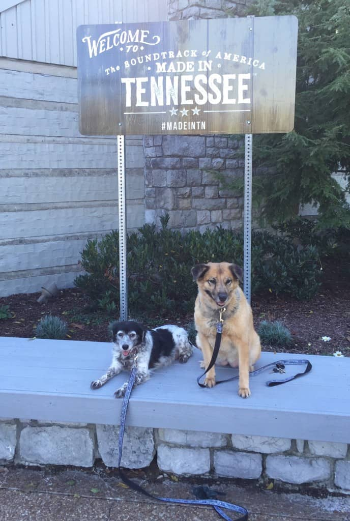 Dogs in Tennessee